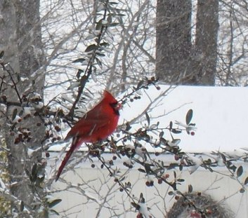 Redbird large.jpg